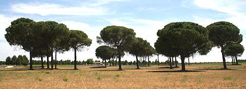 Parque poblado de pinos con bancos para poder sentarse