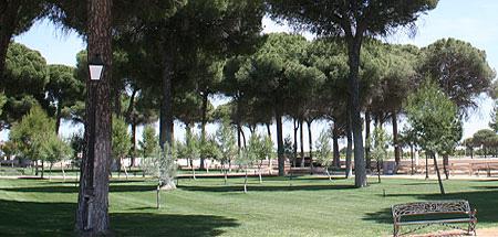 Terreno poblado de pinos